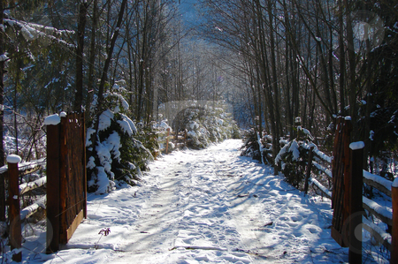 Winter Road stock photo, Mountain road covered with snow in a cold day of winter. by Bagiuiani Kostas