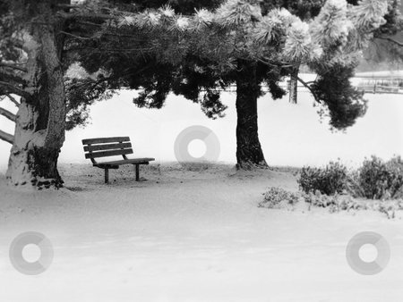 Park Bench in Wnter stock photo, A park bench under trees in the snow. Concepts include alone, solitary, single, isolated, lonely.  by Corinna Walby