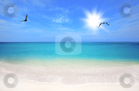 Boca Grandi beach stock photo, Turquoise water and white sand at Boca Grandi beach, Aruba by Kjersti Jorgensen