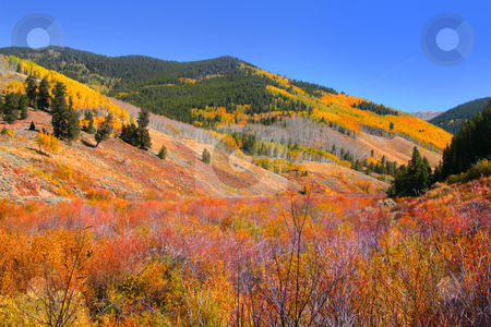 Scenic Rocky mountains stock photo, Bright colors of Autumn trees in Rocky mountains by Sreedhar Yedlapati