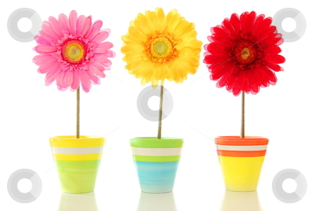 Lucky flowers stock photo, lucky summer flowers in pot  on a happy day           by Gunnar Pippel