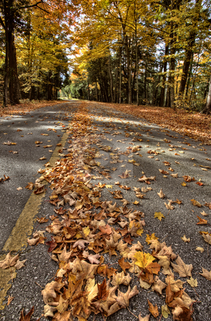 Autumn Leaves stock photo, Autumn Leaves on road northern Michigan by Mark Duffy