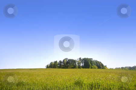 Trees in the meadow stock photo, Scenic landscape of blue sky and green meadow by Sreedhar Yedlapati