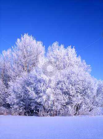 Beautiful winter landscape of frozen trees  stock photo, Beautiful winter landscape frozen trees in sunshine  by Ingvar Bjork