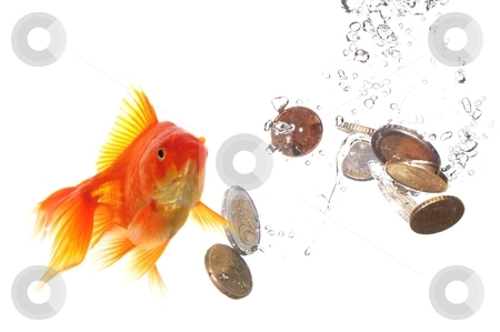 Goldfish and money stock photo, goldfish and euro money showing finance or investment concept by Gunnar Pippel
