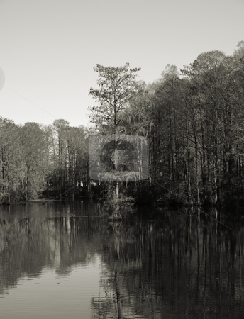 Winter view stock photo, Trees along the shore of a swampy lake during the winter. Shown in black and white by Tim Markley