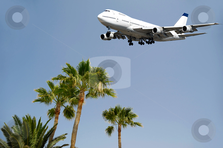 Jumbo and palms stock photo, Jumbo is flying over palms ready to land  by Lars Christensen