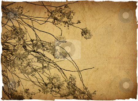 Vintage paper floral stock photo, old shabby paper textures - perfect background with space for text or image