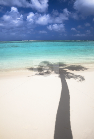 Tropical beach and shadow of coconut tree stock photo, Tropical beach and shadow of coconut tree by tomwang