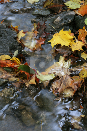 Autumn Stream Foliage stock photo, A closeup of a stream in autumn with lots of fallen leaves.  The shot was taken with a slow shutterspeed to  give the water it's milky look. by Chris Hill