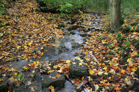 Autumn Stream stock photo, A stream shot during fall, sprinkled with leaves.  by Chris Hill