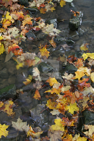 Colorful Autumn Stream stock photo, A stream shot during fall, sprinkled with leaves.  by Chris Hill