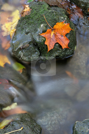 Orange Leaf on a Stone stock photo, A closeup of an orange maple leaf in a stream in autumn.  The shot was taken with a slow shutterspeed to  give the water it's milky look.  by Chris Hill