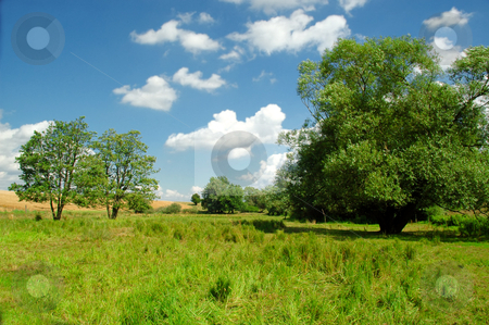 Idyllic landscape stock photo, Idyllic landscape with blue sky, white clouds, green grass and trees by Lars Christensen