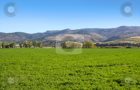 Farm scene stock photo, Lush green farm in the Montana USA by Sreedhar Yedlapati