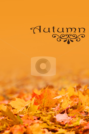Autumn background stock photo, Background with open space made with autumn leaves by Sreedhar Yedlapati