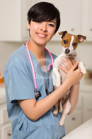 Smiling Attractive Mixed Race Veterinarian Doctor or Nurse with  stock photo, Smiling Attractive Mixed Race Veterinarian Doctor or Nurse with Puppy in an Office or Laboratory Setting. by Andy Dean