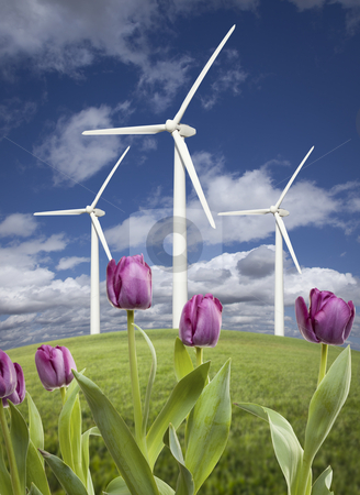 Wind Turbines Against Dramatic Sky, Clouds and Violets stock photo, Wind Turbines Against Dramatic Sky, Clouds and Violets in the Foreground.  by Andy Dean