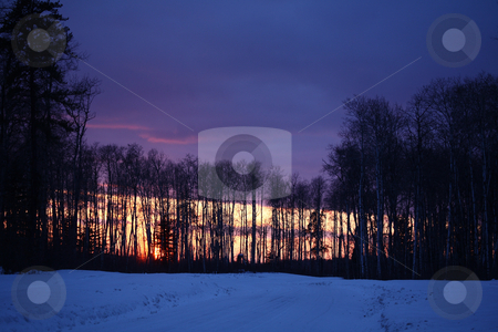 Sun setting through trees stock photo, Sun setting through trees by Mark Duffy