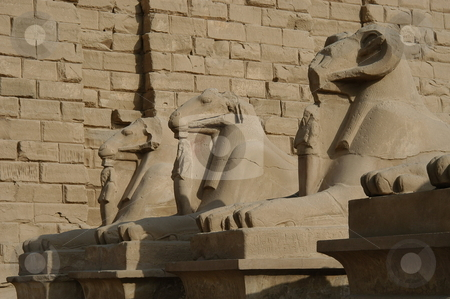Sphinxes at Cairo stock photo, Sphinxes at Cairo, Egypt by Albo