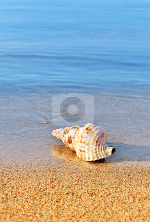 Seashell on serene beach stock photo, Picture of a seashell on a serene beach, washed by calm blue waters. Room for text. by Andreas Karelias