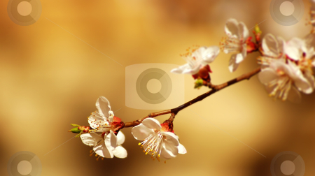 Flower tree  stock photo, flower tree on natural background by sutike