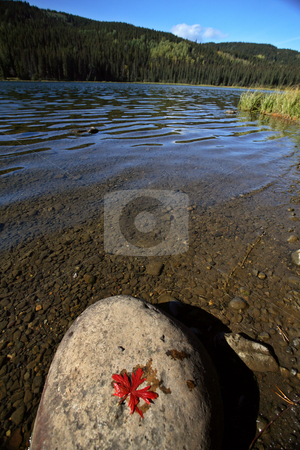 Leaf on rock at Twin Lakes in scenic Alberta stock photo, Leaf on rock at Twin Lakes in scenic Alberta by Mark Duffy