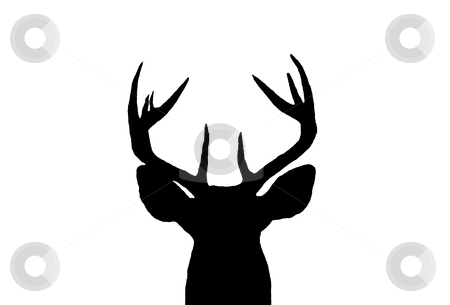 Whitetail Deer Buck Silhouette stock photo, A Silhouette of a Male White Tail Deer head by David Schliepp