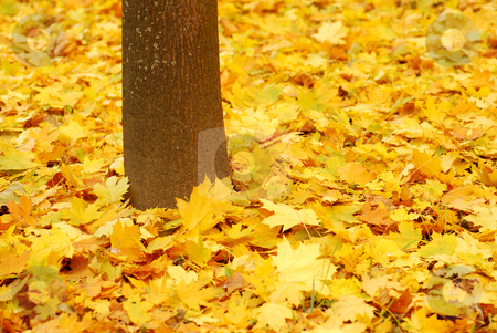 Autumn background stock photo, Autumn background by sutike