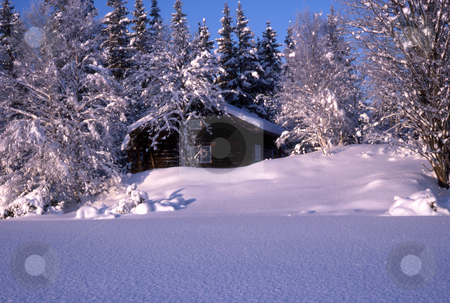 Cabin in winter stock photo,  A small cabin with beautiful snowy trees in sunshine by Ingvar Bjork
