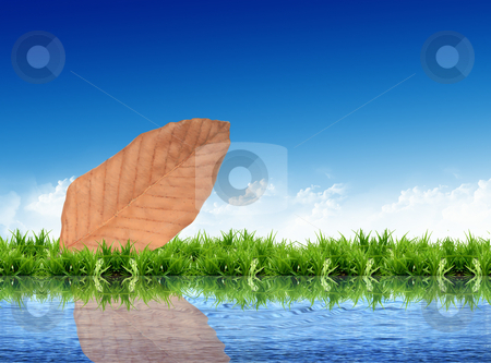 Leaf on the grass with the bright sky stock photo, leaf on the grass with the bright sky by rufous