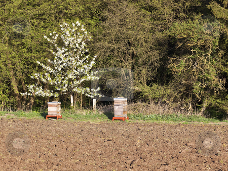 Bee hives stock photo, two bee hives near a plowed field with trees and hedgerows in rural england by Mike Smith