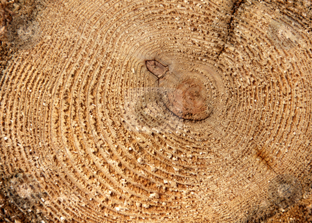 Tree Rings Close-up stock photo, A close-up of the cross section of a tree, displaying annual rings.  by Chris Hill