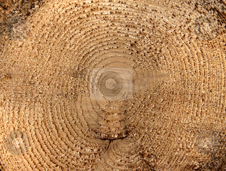 Tree Rings Macro stock photo, A close-up of the cross section of a tree, displaying annual rings.  by Chris Hill