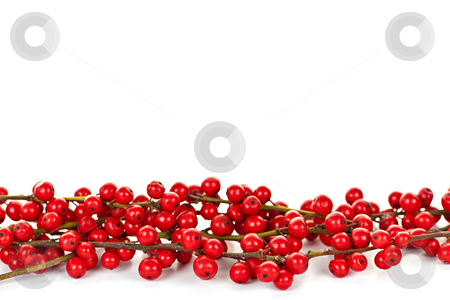 Red Christmas berries border stock photo, Red winterberry Christmas border with holly berries on branches by Elena Elisseeva