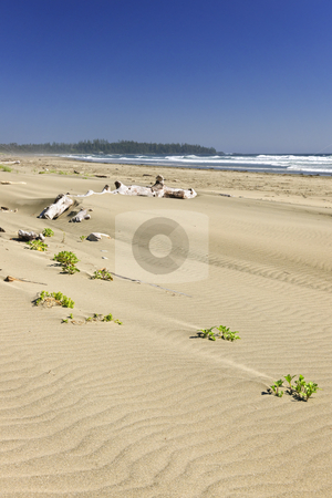 Sandy beach on Pacific ocean in Canada stock photo, Long Beach in Pacific Rim National park, Vancouver Island, Canada by Elena Elisseeva