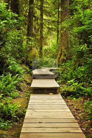 Path in temperate rainforest stock photo, Wooden path through temperate rain forest. Pacific Rim National Park, British Columbia Canada by Elena Elisseeva