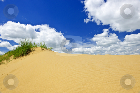 Desert landscape in Manitoba, Canada stock photo, Landscape of Spirit Sands dunes in Spruce Woods Provincial Park, Manitoba, Canada by Elena Elisseeva