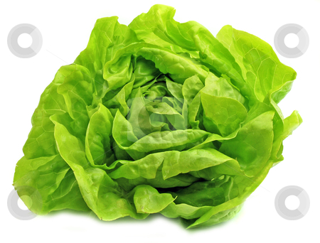 Fresh salad lettuce stock photo, Fresh salad lettuce in white background by bakelyt