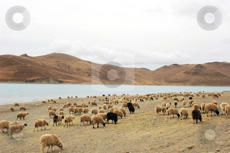 Landscape stock photo, Landscape of mountains and lake with sheep on the meadow by John Young