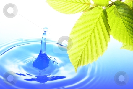 Nature stock photo, green leaves and splashing water drop showing spa or zen by Gunnar Pippel