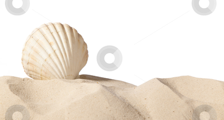 Shell on beach stock photo, shell on beach isolated on a white background,with a lot of copy-space by twixx