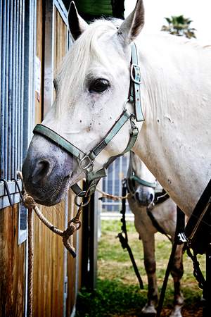 White horse parked stock photo, White horse tethered to its booth by Creative Shield