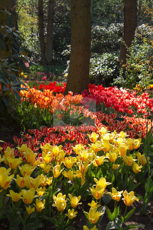 Garden in spring with lots of tulips stock photo, Spring garden with lots of colorful, beautiful tulips - vertical image by Colette Planken-Kooij