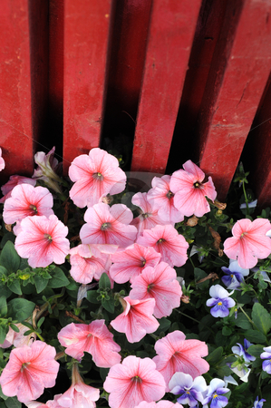 Blooming flowers in spring stock photo, Blooming flowers in the spring by John Young