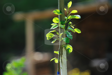 New growth concept witn young tree stock photo, new growth concept witn young tree outdoor in nature by Benis Arapovic