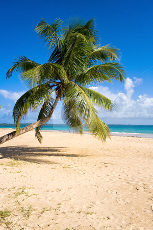 Tropical beach landscape stock photo, Tropical beach landscape from Sainte-Marie island, Madagascar by Pierre-Yves Babelon