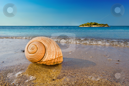 Seashell on calm Mediterranean beach stock photo, Seashell on a sandy beach in the Mediterranean, washed by sea surfs. by Andreas Karelias