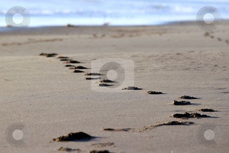 Beach footsteps stock photo, Footsteps at the beach in the sand with water in the background by Henrik Lehnerer