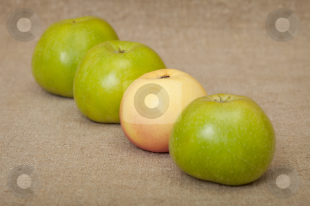 Three green apples and one yellow stock photo, Three green apples and one yellow against a canvas by Alexey Romanov